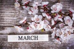 Цветение и марш дерева абрикоса пишут на деревянной предпосылке стоковое изображение rf