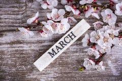 Цветение и марш дерева абрикоса пишут на деревянной предпосылке стоковые фотографии rf