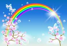 Цветение и радуга Сакуры Стоковая Фотография RF