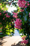 Цветение каштана Стоковое Изображение
