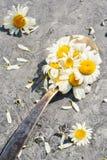 Цветение маргаритки стоцвета цветет травы в старой ретро ложке стоковая фотография rf
