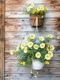 Цветение на деревянной предпосылке Стоковые Фото