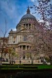 Цветение на St Paul стоковая фотография rf