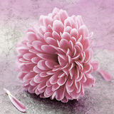 цветение немногая стоковое изображение rf