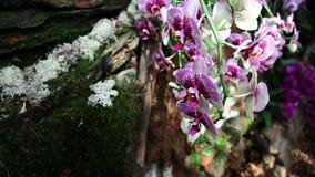Цветение орхидеи сток-видео
