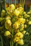 Цветение орхидей Стоковое Изображение RF