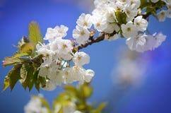 Цветение перед голубым небом стоковые изображения
