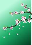 Цветение персика иллюстрация штока