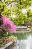 Цветение персика Стоковые Фотографии RF
