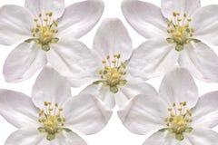 цветение предпосылки Стоковые Изображения