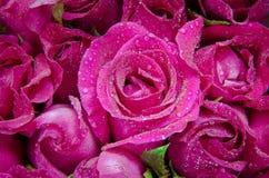 Цветение розы пинка стоковые изображения
