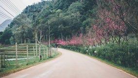 Цветение Сакуры в зиме Стоковые Фотографии RF