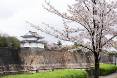 Цветение Сакуры с крепостью замка Осака в предпосылке Стоковые Изображения