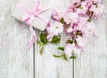 Цветение Сакуры с подарочной коробкой Стоковое фото RF