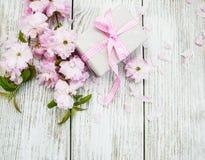 Цветение Сакуры с подарочной коробкой Стоковая Фотография RF