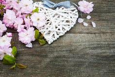 Цветение Сакуры с сердцем Стоковое Фото