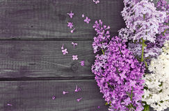Цветение сирени на деревенской деревянной предпосылке с пустым космосом Стоковое Фото