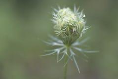Цветение с пауком Стоковое фото RF