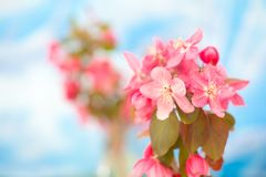Цветение фруктового дерева в солнечности стоковая фотография