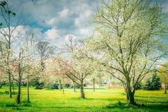 Цветение фруктовых дерев дерев сада или парка вал весны природы ветви яркий цветя зеленый стоковое фото