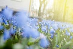 цветение цветет весна Зеленый цвет сезона в макросе солнечного дня Крупный план травы сада весеннего времени Пасха и может праздн Стоковые Изображения