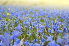 цветение цветет весна Зеленый цвет сезона в макросе солнечного дня Крупный план травы сада весеннего времени Пасха и может праздн Стоковая Фотография RF
