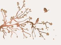 цветение цветет слива Стоковое Изображение