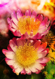 Цветение цветка кактуса Стоковые Изображения