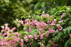 Цветение цветка на своем дереве в весеннем времени стоковое изображение rf