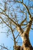 Цветение цветков красного цвета на дереве разрешения сарая Стоковые Фотографии RF
