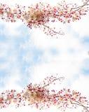 Цветение цветков Сакуры зацветая стоковые изображения rf