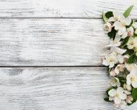 Цветение Яблока весны Стоковые Изображения RF