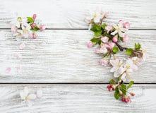 Цветение Яблока весны Стоковая Фотография