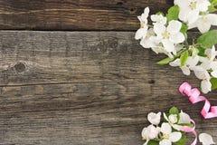 Цветение яблони весны на деревенской деревянной предпосылке с космосом Стоковое Фото