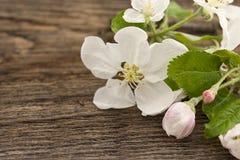 Цветение яблони весны на деревенской деревянной предпосылке Стоковое Изображение