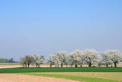 цветение Стоковые Изображения