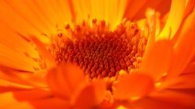 Цветение Стоковое Изображение RF