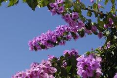 цветение Стоковая Фотография