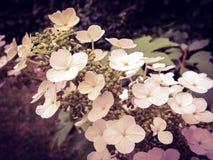цветение стоковое фото