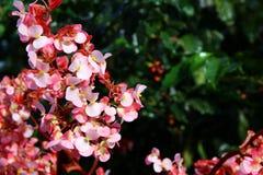 цветение Стоковые Изображения RF