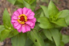 цветение Стоковое фото RF