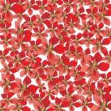 Цветение Hibiscus Стоковые Фотографии RF