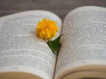 Цветение japonica Kerria в открытой книге Стоковое Изображение RF