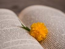 Цветение japonica Kerria в открытой книге Стоковые Фотографии RF