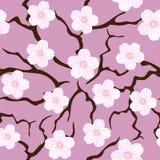 цветение sakura безшовный Стоковая Фотография