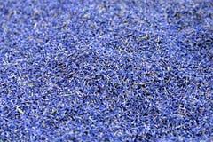 Цветения лаванды стоковая фотография