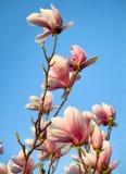 Цветения весеннего времени Стоковое Изображение