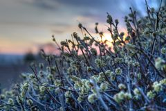 Цветения весны в пустыне Стоковые Фотографии RF