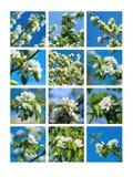 Цветения 1 весны коллажа Стоковые Изображения RF
