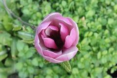 Цветения весны стоковые изображения rf